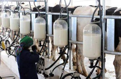 Ce este industria laptelui?