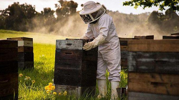 20 de lucruri despre apicultura si albine