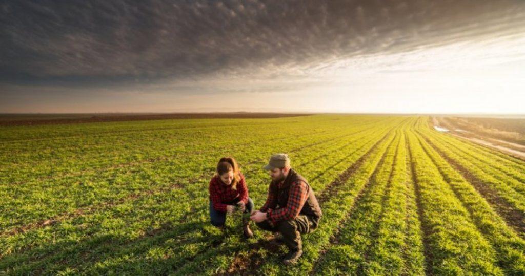 Tot ce trebuie sa stiti despre agricultura bio